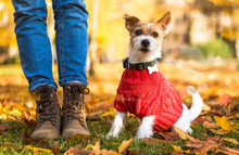 Stylish Hipster Woman Playing With Puppy Jack Russell In The Autumn Park, Cool Outfit, Romantic Mood, Fun. The Dog Is Dressed In A Sweater And Sits Near The Feet Of A Man By The Boots, Bottom View
