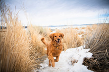Dog Running On Snow Covered Fi...