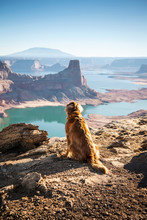 Dog Sitting On Cliff Along The...