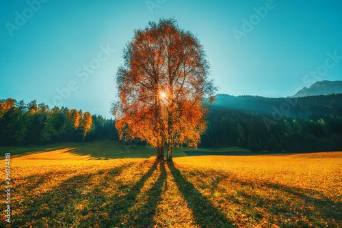 Autumn trees and orange leaves . Fall. Autumnal Park. Autumn scene