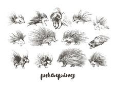 Set Of Hand Drawn Porcupines