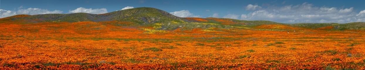 Antelope Valley Poppy Panorama