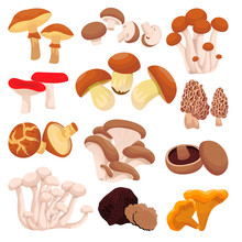 Mushrooms Collection, Isolated...