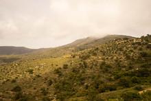 Paysage De Maquis En Espagne, ...