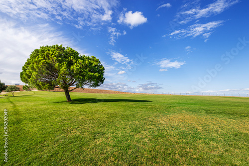 Green grass and trees on park. Rural Landscape of Green Fields under blue sky, on Parque das Nações, Lisbon, Portugal.