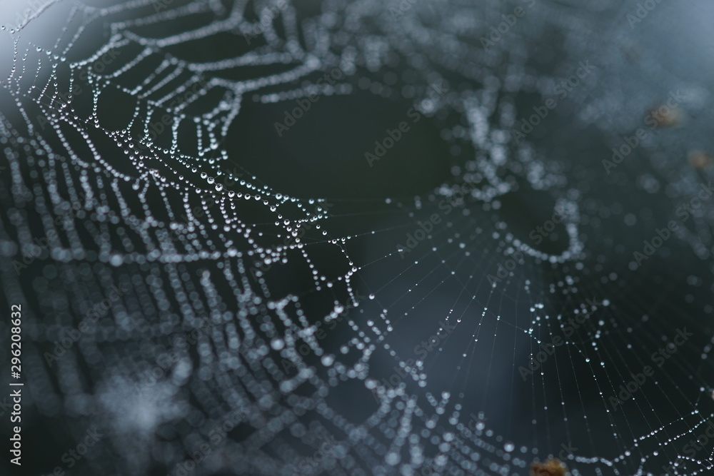 Fototapety, obrazy: spider web in droplets of rain, macro image