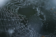 Spider Web In Droplets Of Rain, Macro Image