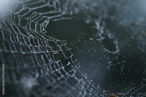 Door stickers Macro photography spider web in droplets of rain, macro image