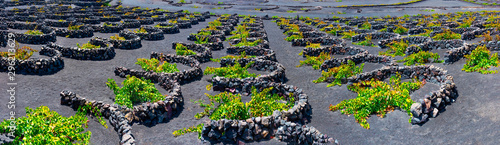 Poster Canary Islands La Geria vineyard on black volcanic soil.Scenic landscape with volcanic vineyards. Lanzarote. Canary Islands. Spain