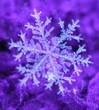 canvas print picture - purple snowflake