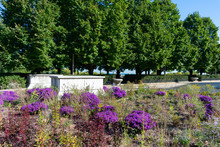 Park With Purple Flowers And Green Trees Along Lake Michigan In The South Loop Chicago