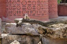 Meerkat On A Brach Before An African House