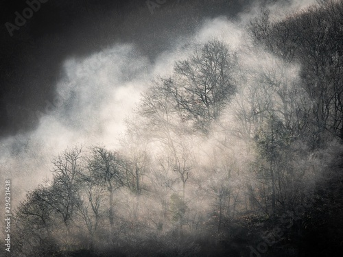 black-and-white-shot-of-leafless-trees-on-the-hill-in-a-fog-mystery-horror-concept