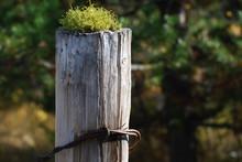 Mossy Post