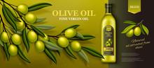 Olive Oil Banner Ads