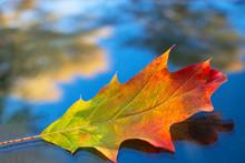 Beautiful Multi-colored Autumn...