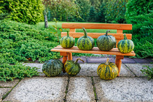 Tiny Wooden Bench And Green Pumpkins  In The Garden.