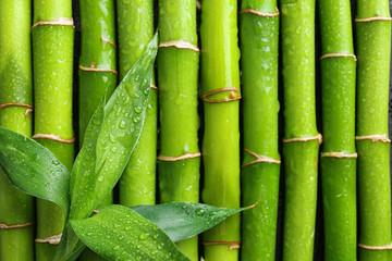 Fototapeta Do Spa Green leaves on bamboo stems, top view