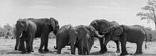 Small Elephant Group At A Wate...