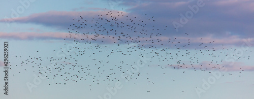 Photo  Flock of birds in the sky at sunset