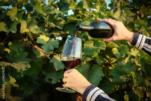 Bar Woman pouring tasty wine from bottle into glass in vineyard