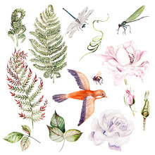 Warercolor Set With Different Leaves And Flowers, Bird And Insects.