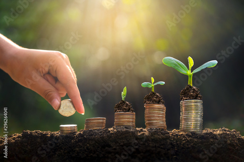 Garden Poster Plant Money growth Saving money. Upper tree coins to shown concept of growing business