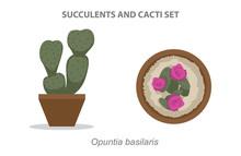 Opuntia Basilaris Succulent An...