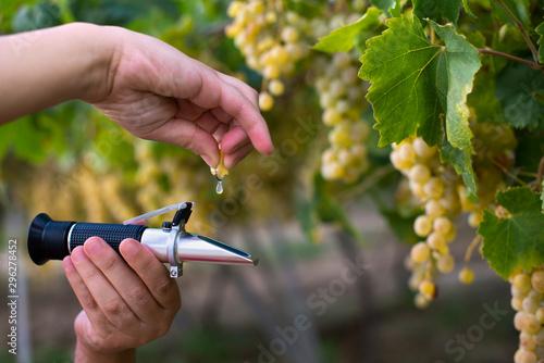 Farmer measure grape sweetness with refractometer. - 296278452