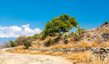 Cactuses At The Yagul Archaeol...