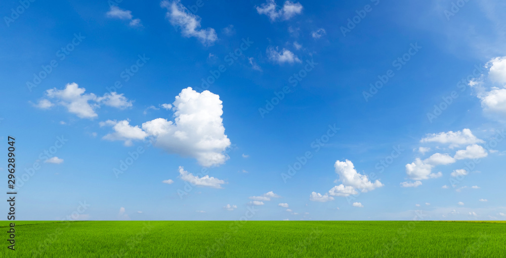 Fototapety, obrazy: sky with clouds and green field background panorama