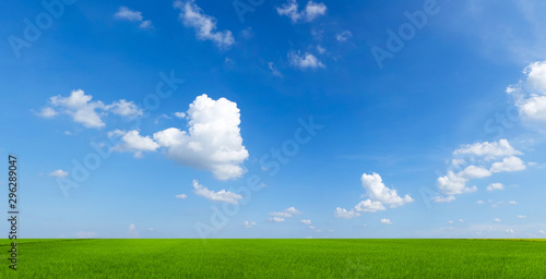 Fototapeta sky with clouds and green field background panorama obraz