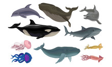 Marine Life Creatures Vector V...