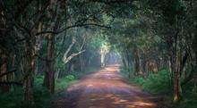 One Of The Many Road Ways Inside Wilpathu National Park In Sri Lanka