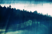 Coniferous Trees In The Fog In...