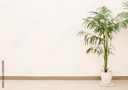 Fotomural  観葉植物と白い壁、ヤシ