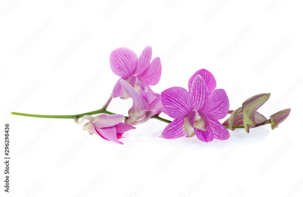 Fototapety, obrazy: pink orchid flowers isolated on white background