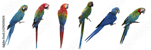 Tuinposter Papegaai Set of macaw isolated on white background