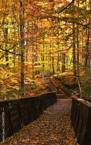 Garden Poster Orange bridge in autumn forest
