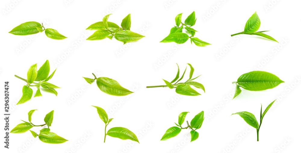 Fototapety, obrazy: green tea leaf on white background