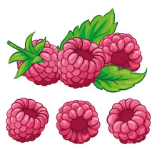 Raspberry With Leaves Isolated On White Background. Berry Branch Raspberries. Hand Drawn Vector Illustration.