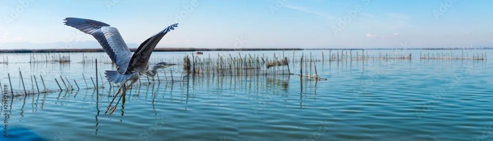 Fototapeta Panorama Graureiher im Nationalpark Albufera Valencia