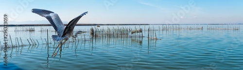 Photo Panorama Graureiher im Nationalpark Albufera Valencia
