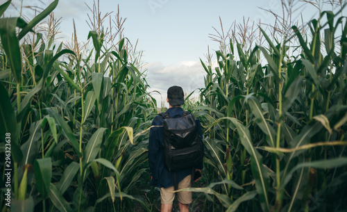 Fényképezés Back of a young man walks across a corn field