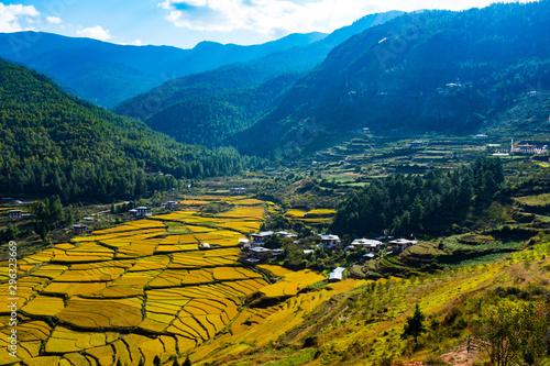 Bhutan Paro Paddy field Wallpaper Mural