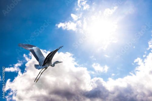 Fliegender Reiher vor Wolken Wallpaper Mural