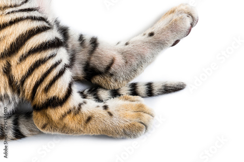 Keuken foto achterwand Tijger Close up of, Two months old tiger cub against white background
