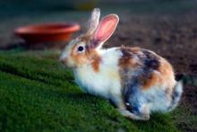 Bunny Rabbit In Farm