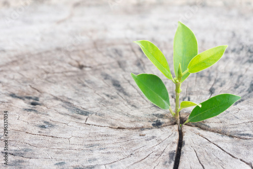 Strong seeding growing from dry and old  cut down tree as new bussiness have to Canvas Print