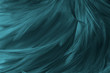 Beautiful macro close up dark green blue azure feather pattern texture background